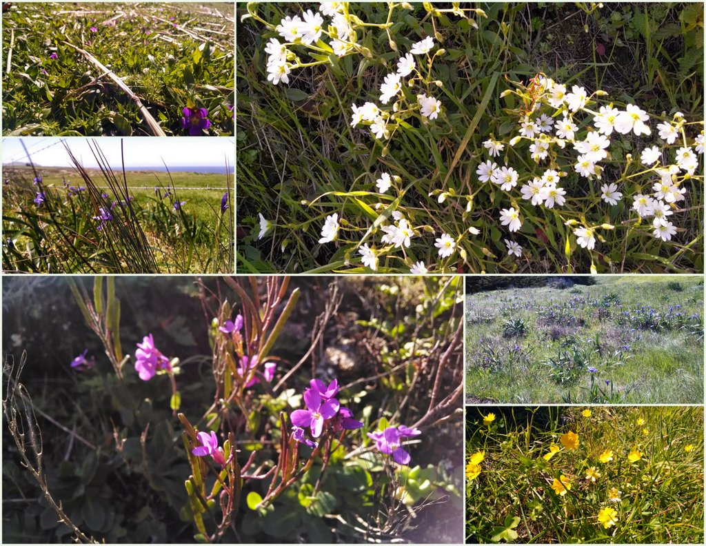 2014_apr_Point Reyes, B Ranch
