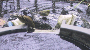 2005小鸟洗澡