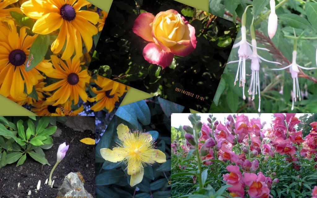维多利亚博恰特花园3
