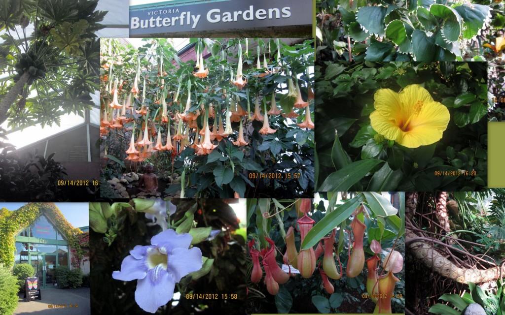 维多利亚蝴蝶园