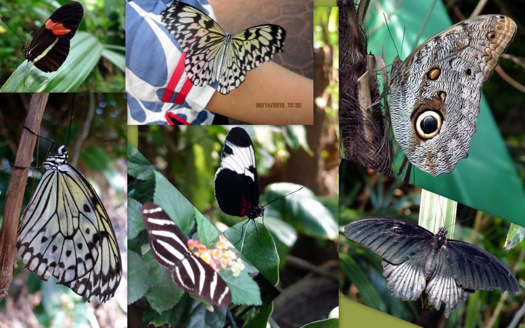 维多利亚蝴蝶园2