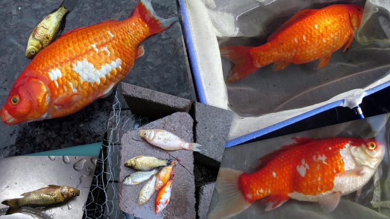 Fish20131